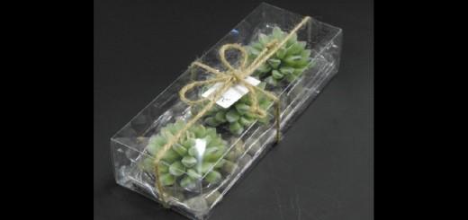 cactus candle box Ambalaje Plastic | Ambalaje Din Plastic