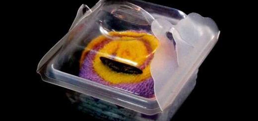 Caserole plastic miniprajitura