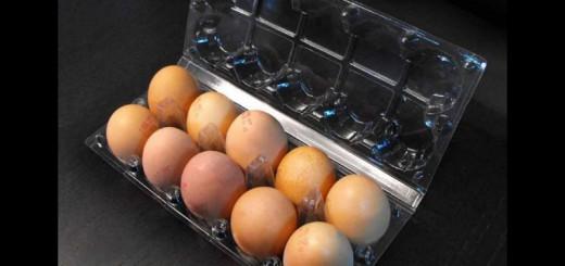 Caserole 10 oua de gaina Ambalaje Plastic | Ambalaje Din Plastic