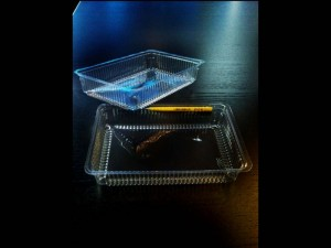 caserole-caserole-plastic-miniprajituri-710-6 Ambalaje Plastic | Ambalaje Din Plastic